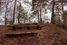 Old Bench From Tree In Forest ...