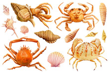 Watercolor Set Of Seashells, Crab, Starfish On An Isolated White Background, Hand Drawing, Summer Sea Clipart