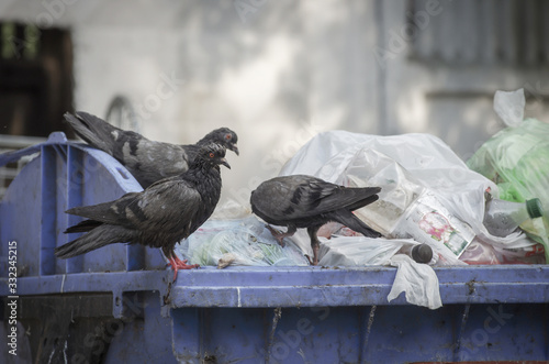 Fototapeta Overflowing garbage cans with bags, boxes, plastic bottles and pigeons obraz