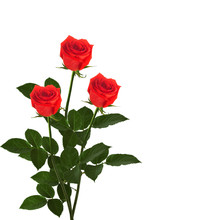 Bouquet Of Red Roses On The Ba...