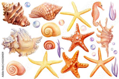 Fotografie, Obraz Summer sea clipart, watercolor set of seashells, seahorse, starfish, bubbles, se