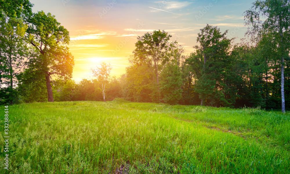 Fototapeta Meadow with green grass