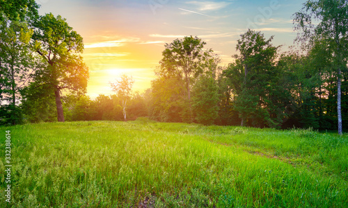 Meadow with green grass Fototapeta