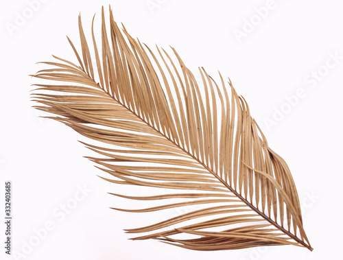 Tropical dry palm leaf isolated on white background Fototapeta