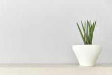 Succulent Plant In A White Pot...
