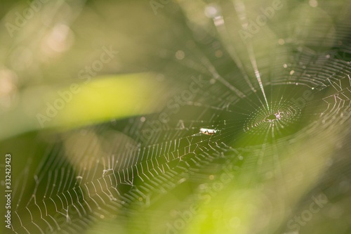 Photo macrophotography of spider web with beautiful late afternoon light