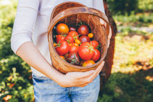 Gardening And Agriculture Conc...