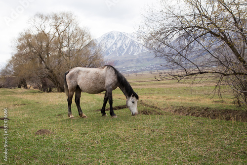Photo Horses graze in a meadow in the mountains. Grazing livestock.
