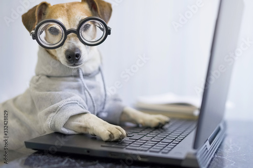 Adorable dog in glasses working with computer Wallpaper Mural