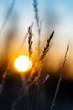 Gras Gräser Halme Silhouetten Gegenlicht Sonnenuntergang Dämmerung Sonnenaufgang Licht Stimmung Atmosphäre Abend Farbenspiel Verlauf Nahafunahme Gefühl Emotion Sorge Hoffnung Zuversicht Aussicht