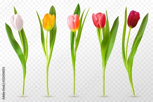Colorful tulips Wallpaper Mural