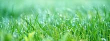 Grünes Saftiges Wiesengras
