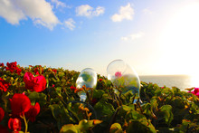 Wine Glasses In The Rose Garden With Blue Sky And Clouds