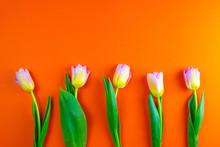 Bunch Of Orange Tulips On Back...