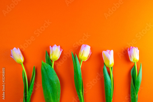 Bunch of orange tulips on background in the same color Canvas Print