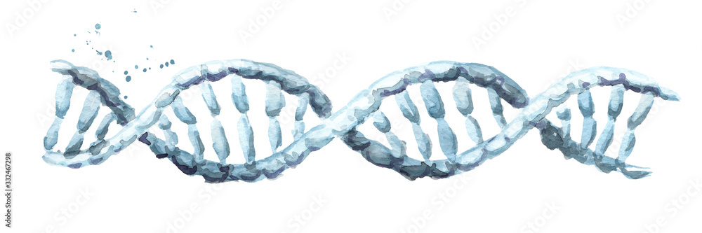 Fototapeta dna helix. Hand drawn watercolor illustration, isolated on white background