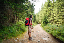 Hiker / Backpacker On A Forest...
