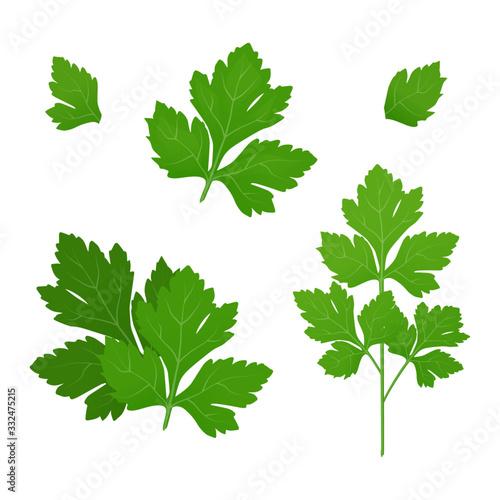 Fresh green parsley leaves on white background Fototapet