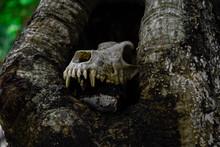 Caveira De Animal Em Buraco De...