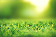 Spring and nature background concept, Closeup green grass field with blurred park and sunlight.