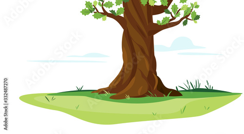 Obraz na plátne One wide massive old oak tree trunk with green leaves isolated illustration, maj