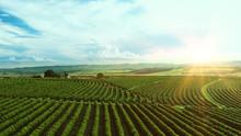 Aerial Image Of Coffee Plantat...