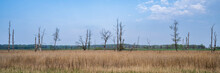 Trunks Of Dead Trees In The Fi...