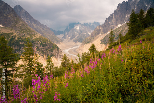 Green sheer hill with pink flowers growing on meadow under waving road in mountains in Chamonix, Mont-Blanc - 332503601