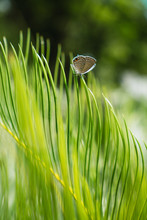 Small Butterfly On Green Leaf