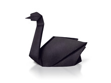 Origami Paper Rare Black Swan On A White