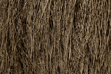 Dry Grass Texture Background. ...