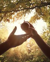 Adam And Eve Forbidden Fruit I...