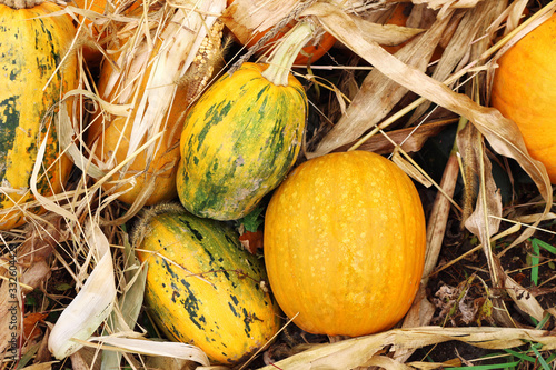 Photo Fall outdoor pumpkin at kitchen garden