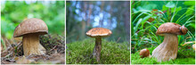 Edible Mushrooms Mushrooms Gro...