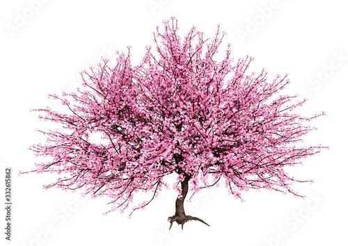 3D Rendering Pink Blooming Sakura Tree on White