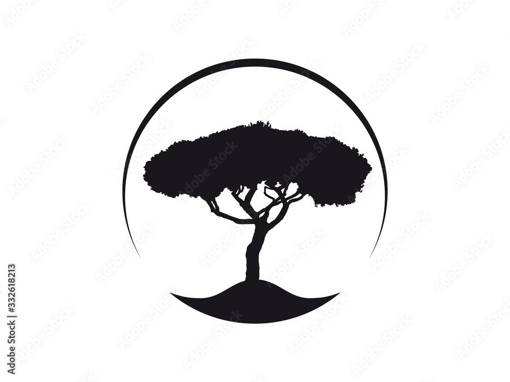 Vektor Logo Icon Pinus Pinea Kiefer Schirmkiefer, auch Mittelmeer-Kiefer genannt
