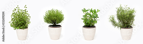 Fototapeta Green thyme, oregano, mint and rosemary plants growing in basket on white backgr