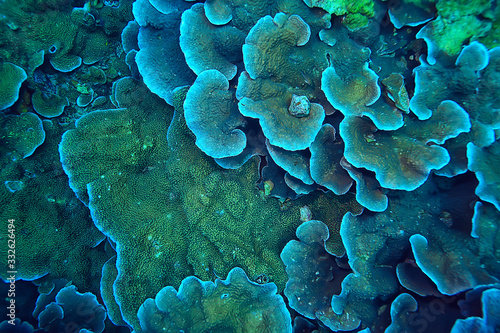 Photo coral reef macro / texture, abstract marine ecosystem background on a coral reef