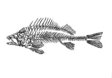 Abstract And Liniar Fish Skele...