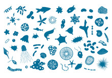 Vector Illustration With Microscopic Marine Creatures. Oceanic Krill Under Microscope. Small Fish, Corals, Shells, Microorganisms Isolated On White.  Sea Plankton, Detailed Vector EPS 10 Illustration.