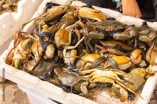 Fresh serrated mud crabs prepare to sell on street food market Tapéta, Fotótapéta