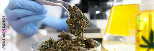 Obraz Close-up view of glass container with bunch of dry cannabis. Chemist with tweezer taking material for test under microscope. Flask with yellow liquid. Laboratory and science concept - fototapety do salonu