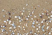 Seashells On The Seashore, Soft Focus. Sea Of Azov