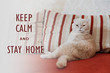 Keep calm and stay home quote banner with text. Funny scottish fold cream cat lies on a sofa.