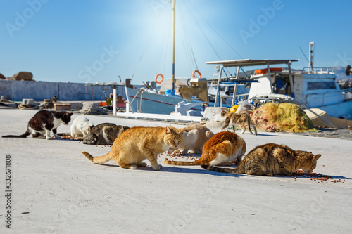 Foto A pack of hungry cats on the embankment