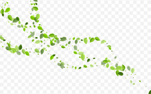 Lime Leaves Vector Concept. Swamp Foliage Forest