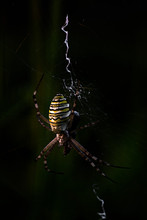 Big Spider Forming The Spiderw...