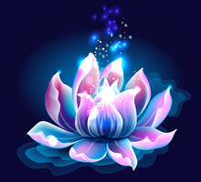 Pink Lotus Flower With Light, ...