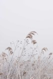 Dry Grass And Flowers In Field / Frozen Wildflowers And Reed / Country Farmhouse Decor - 332700474