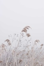 Dry Grass And Flowers In Field...